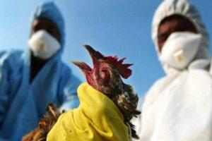 Breaking: Bird Flu Hits Kano, Plateau, 5 Other Nigerian States